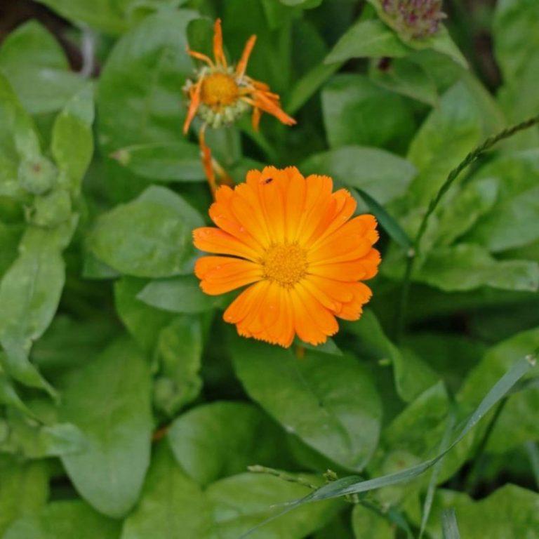 Полевые цветы большие картинки видно