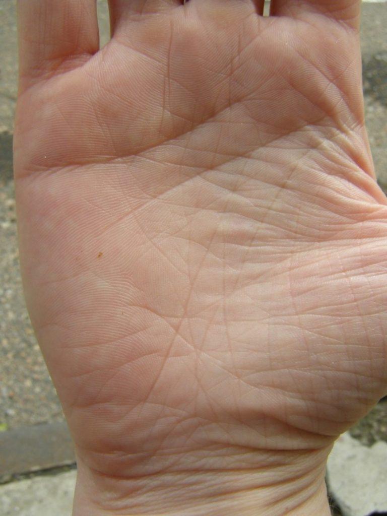 Котята в добрые руки фото саранск недвижимость орландо
